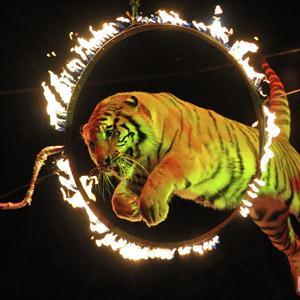 Цирки Тутаева