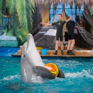 Дельфинарии, океанариумы Тутаева