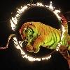 Цирки в Тутаеве