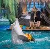 Дельфинарии, океанариумы в Тутаеве