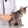 Ветеринарные клиники в Тутаеве